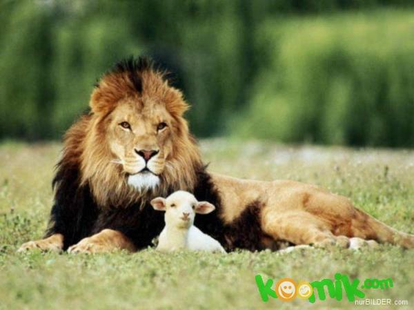 Editör aslana kuzu emanet edilir mi hiç bir lokmada yutar onu